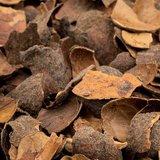Cacaodoppen - 2m³ (1 big bag)_